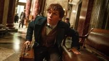 Dalami Peran di 'Harry Potter' Terbaru, Eddie Redmayne Pergi ke Kebun Binatang