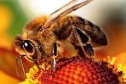 Trend Selebriti Dunia, Merawat Wajah Dengan Racun Lebah