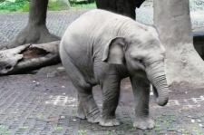 Bertemu Raflesia, Bayi Gajah yang Diberi Nama Oleh SBY