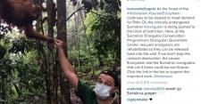 Leonardo DiCaprio Dukung Konservasi Orangutan