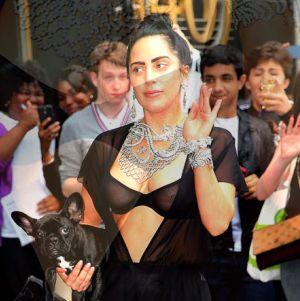 Lady Gaga Dikritik Pencinta Binatang